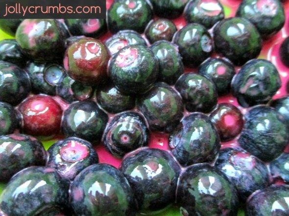 Blueberry Crumble | jollycrumbs.com